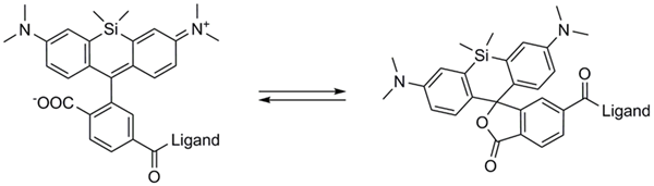 SiR衍生物在荧光(开放)型(左结构)和非荧光(封闭)型(右结构)之间存在平衡