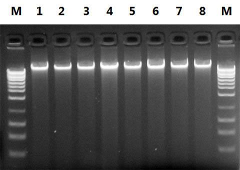 植物DNA提取96孔板试剂盒厂家测试