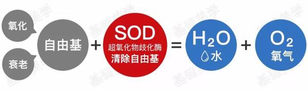 SOD 抗氧化