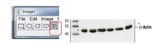 选择红框所示Segmented line沿着倾斜条带画间断线段