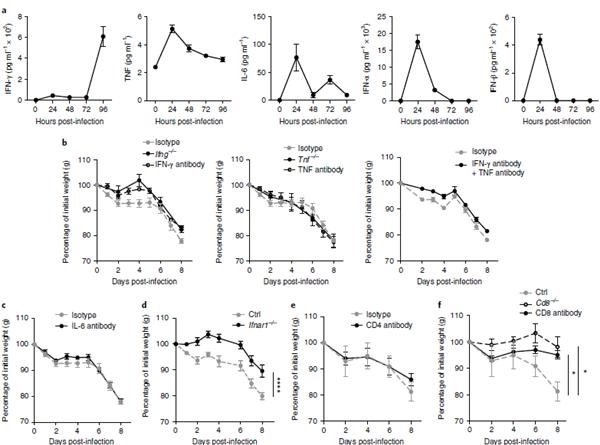 IFN和CD8 T细胞在诱导感染相关性恶病质中起重要作用