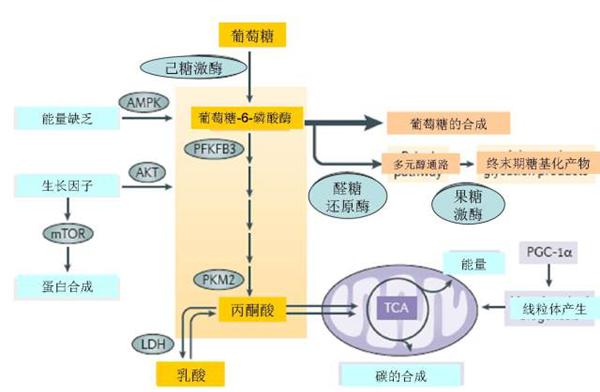 乳酸(CH3CH(OH)COO-)