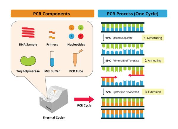 终点PCR