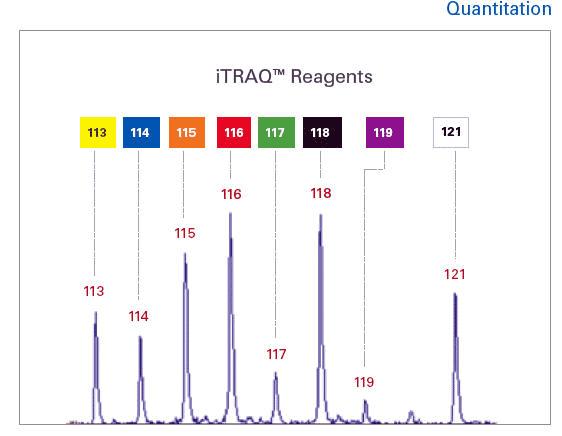 二级质谱图(iTRAQ定量)