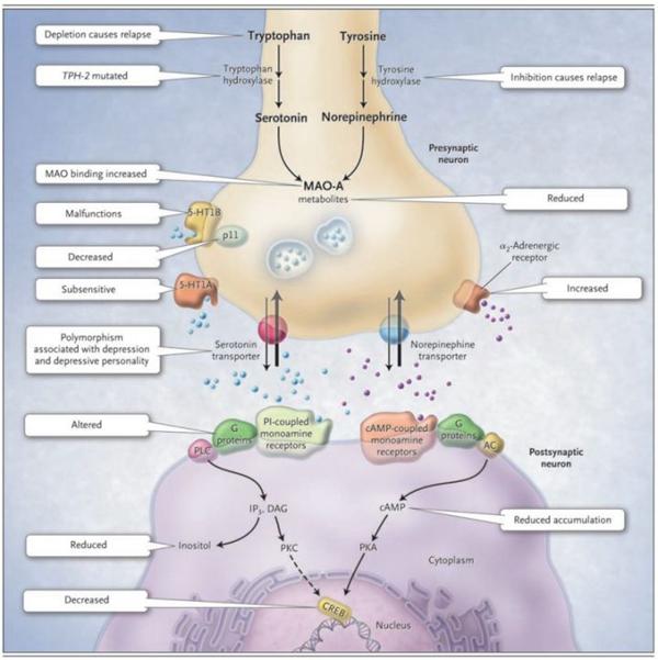 抑郁症研究新思路——Rho GTP酶家族对神经元可塑性调节