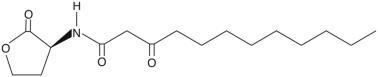 高丝氨酸内酯