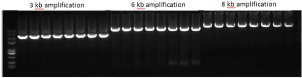长片段DNA扩增