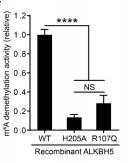 m6A去甲基化酶激活/抑制检测试剂盒