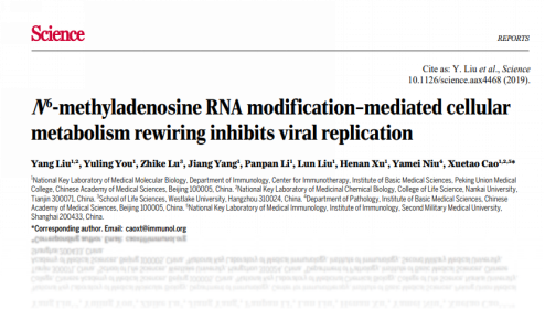 Sciencem6A RNA修饰介导的细胞代谢抑制病毒复制
