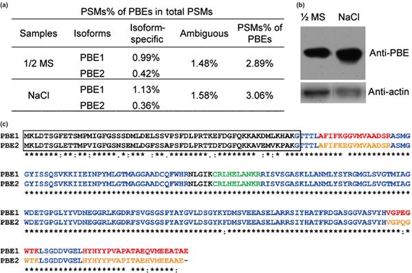 拟南芥20s蛋白酶体pbe亚基的鉴定及序列分析