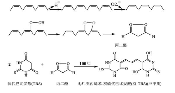 TBARS廣泛用于脂質過氧化反應的指標
