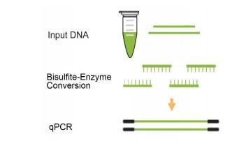 input DNA
