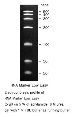 RNA Ladder