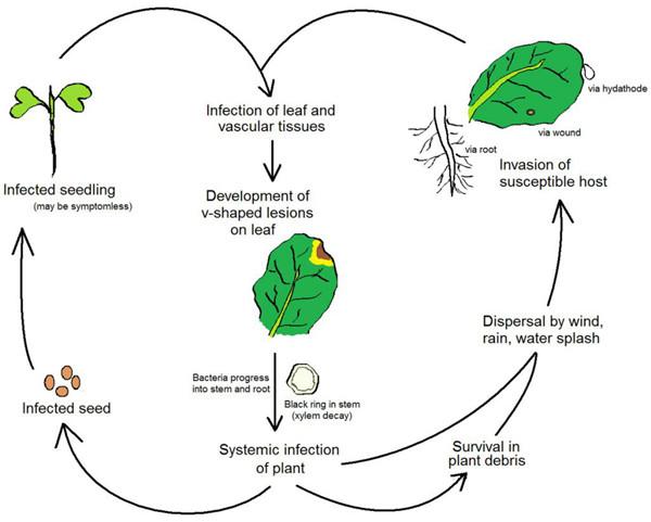 植物病原体