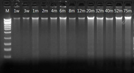 唾液DNA收集与保存管
