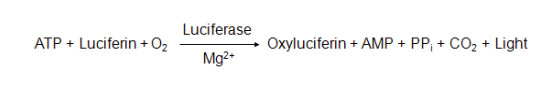 生物化学发光法