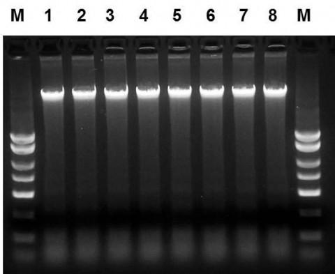 唾液DNA提取试剂盒测试
