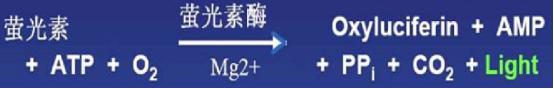 化学发光法细胞活性检原理图