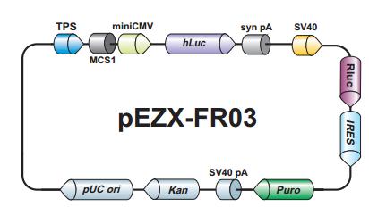 荧光素酶报告基因载体