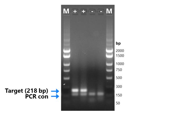隐孢子虫终点PCR试剂盒厂家测试