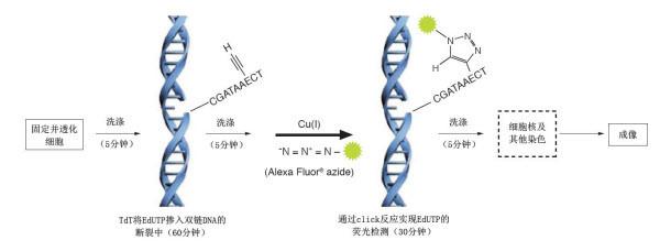 DNA断片标记法