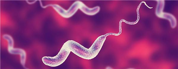 空肠弯曲菌