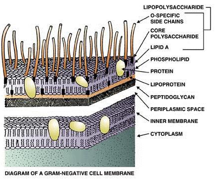 质粒DNA