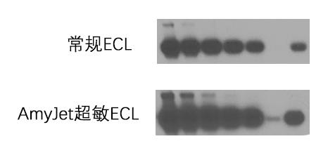 WB超敏ECL检测结果图
