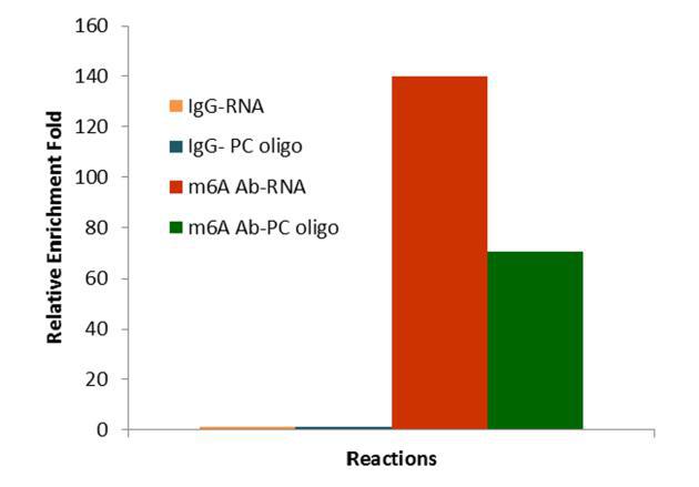 EpiQuik™ CUT&RUN m6A RNA Enrichment Kit