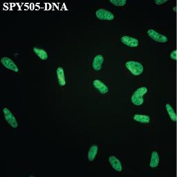 SPY505-DNA