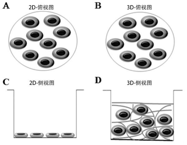 干细胞3D培养