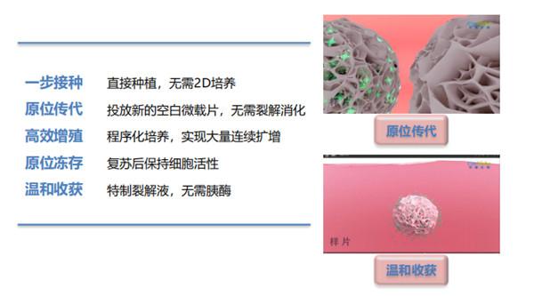 3D FloTrix™ 干细胞微载体