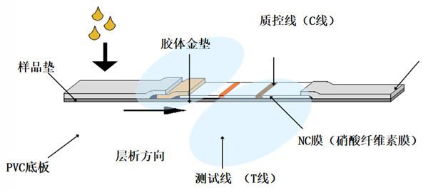 SARS-CoV-2检测