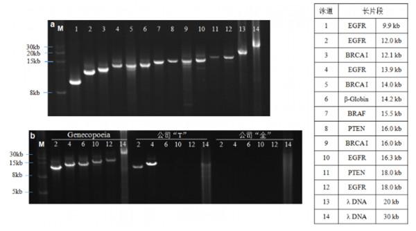 长片段PCR