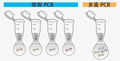 多重PCR