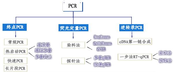 PCR分类