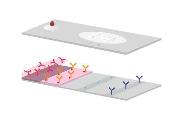 胶体金金标记的山羊抗人Fcγ特异性抗体