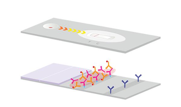 金标抗体复合物