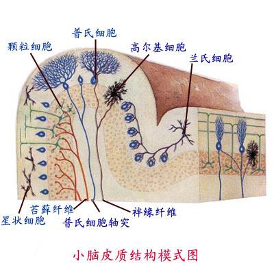 脳神经研究