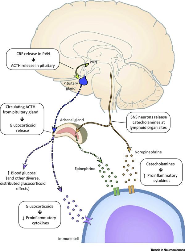 神经内分泌细胞
