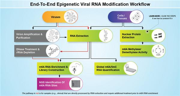 全套病毒RNA修饰研究