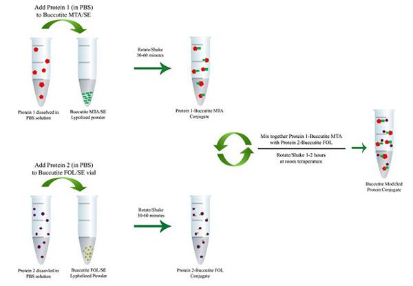 Buccutite™交联技术用于蛋白质-蛋白质缀合