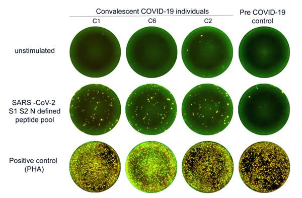 SARS-CoV-2肽库功能
