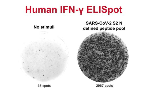 IFN-Y/IL-2 FluorOSpot 分析法在Mabtech IRIS上对T细胞应激反应进行分析