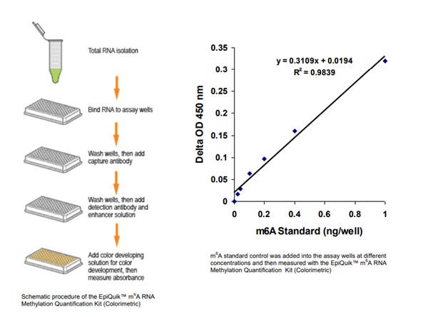 EpiQuik™m6A RNA甲基化定量试剂盒