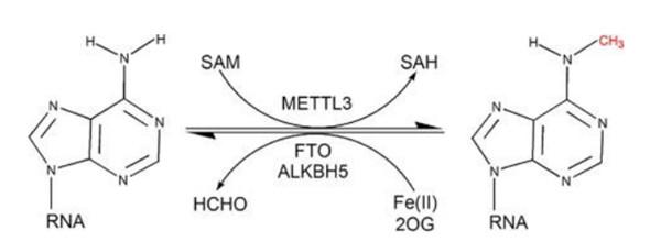 p-9005 检测m6A甲基化