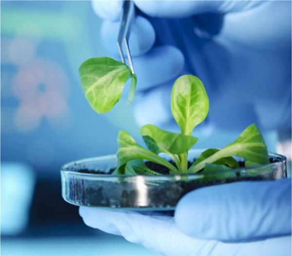 植物组织分离和升级版植物快速PCR方案