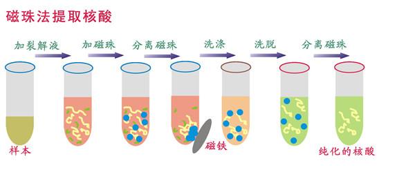 磁珠法提取核酸