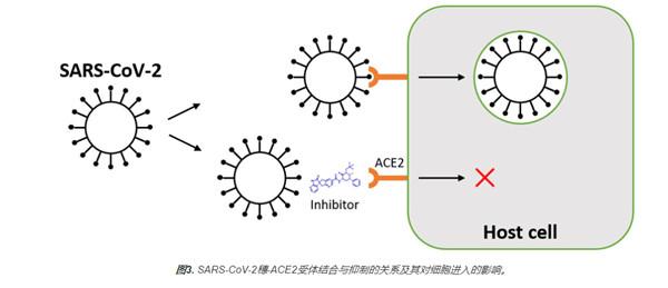SARS-CoV-2 Spike-ACE2结合活性和抑制分析试剂盒