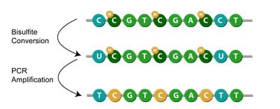 DNA甲基化修饰
